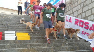 doggy trail