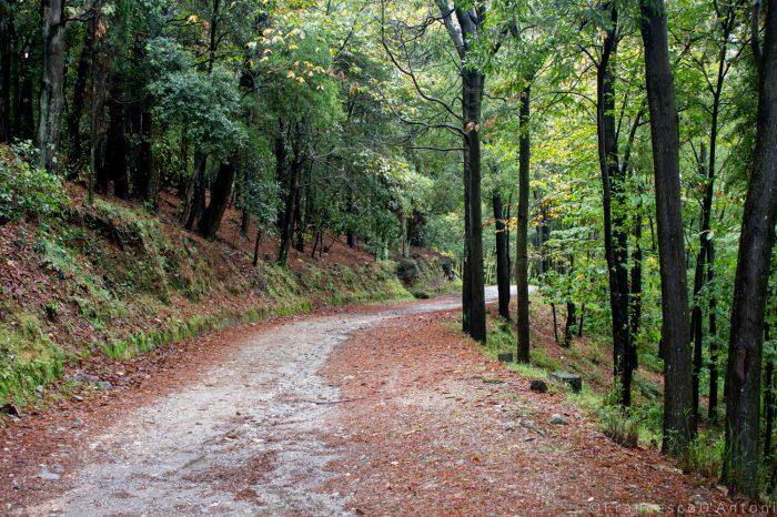 Domenica 8 aprile l'Ecotrail dei Peloritani